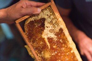Read more about the article Atelier «Récolte de miel»