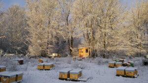 Que se passe-t-il pour les abeilles en hiver ?