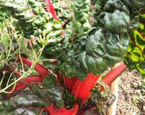 Les plantations en permaculture